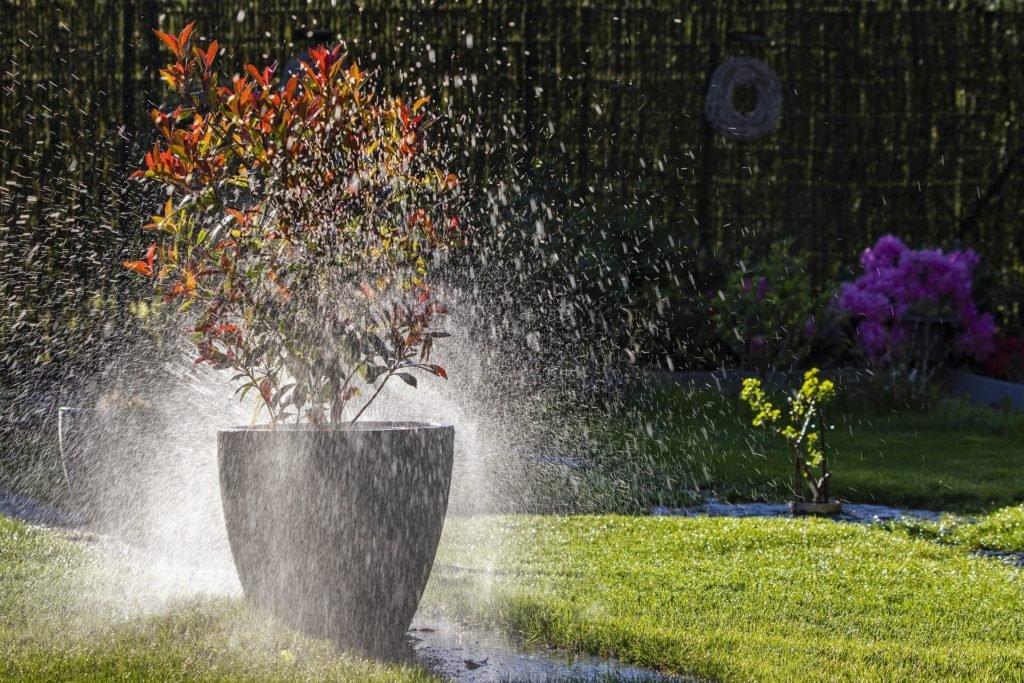 Podlewanie roślin deszczówką